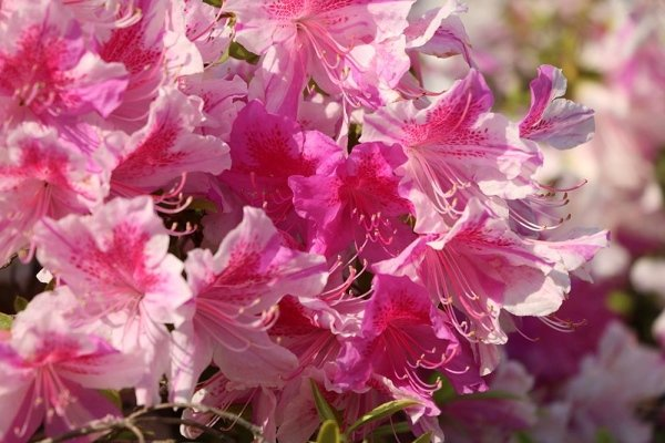 Pianta da fiore